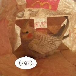 鳥フォトコンテスト「ぷっち」さん