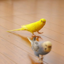 鳥フォトコンテスト「パイン・ピア」さん