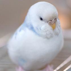 鳥フォトコンテスト「むっち」さん