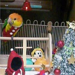 鳥フォトコンテスト「peace家」さん