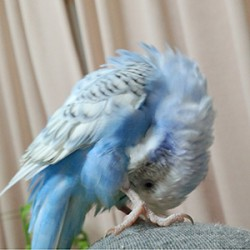 鳥フォトコンテスト「モア」さん