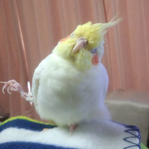 鳥フォトコンテスト「小梅」さん