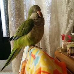 鳥フォトコンテスト「みん」さん