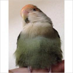 鳥フォトコンテスト「ちゃく」さん