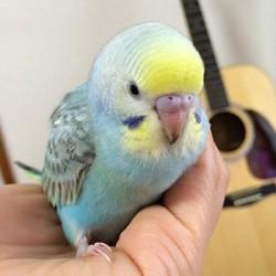 鳥フォトコンテスト「美羽」さん
