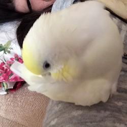 鳥フォトコンテスト「まる」さん
