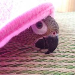 鳥フォトコンテスト「ぽる」さん