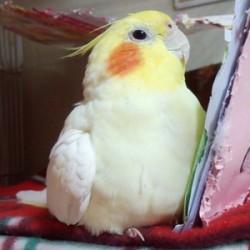 鳥フォトコンテスト「ロビン」さん