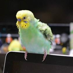 鳥フォトコンテスト「サリー」さん