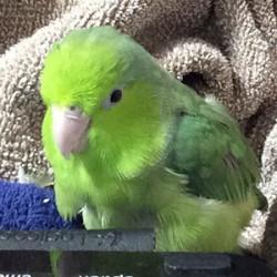 鳥フォトコンテスト「ロボラ」さん