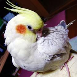 鳥フォトコンテスト「もん」さん