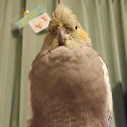 鳥フォトコンテスト「くまおさん」さん
