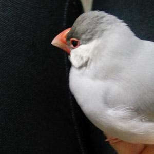 鳥フォトコンテスト「ぎんさん」さん