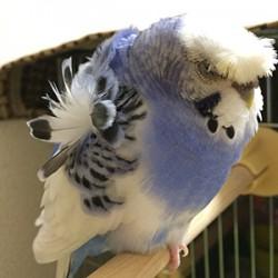 鳥フォトコンテスト「DEAN」さん