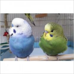 鳥フォトコンテスト「ピー・ラピス」さん