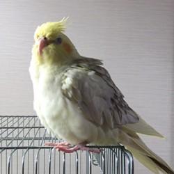 鳥フォトコンテスト「ぴのこ」さん