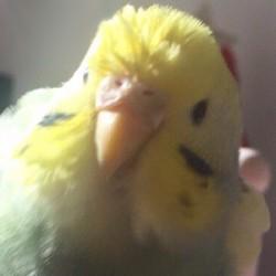 鳥フォトコンテスト「シャルル」さん
