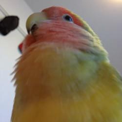 鳥フォトコンテスト「佑夕」さん