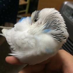 鳥フォトコンテスト「ダイチャス」さん