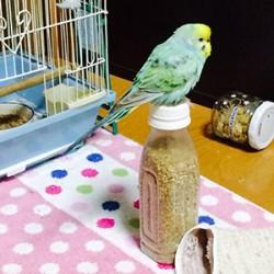 鳥フォトコンテスト「りょうちん」さん
