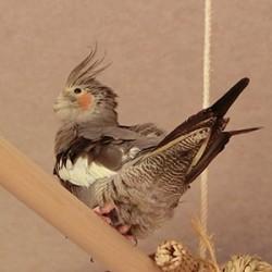 鳥フォトコンテスト「ボヤージュ」さん