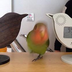 鳥フォトコンテスト「もも」さん