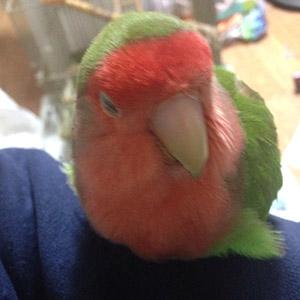 鳥フォトコンテスト「ピカ」さん