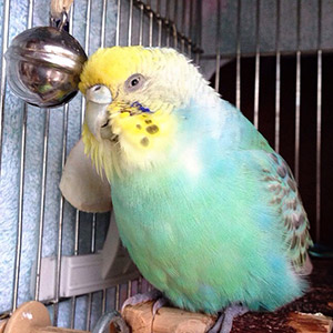 鳥フォトコンテスト「ふぅ」さん