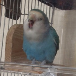 鳥フォトコンテスト「シェル」さん