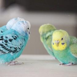 鳥フォトコンテスト「ラン・ルン」さん