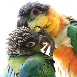 鳥フォトコンテスト「ウロ・ズー子」さん