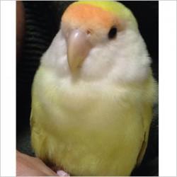 鳥フォトコンテスト「ポポ」さん