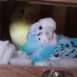 鳥フォトコンテスト「美雪」さん