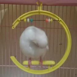 鳥フォトコンテスト「ゆき」さん