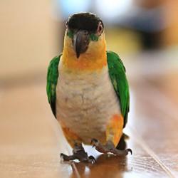 鳥フォトコンテスト「ズー子」さん