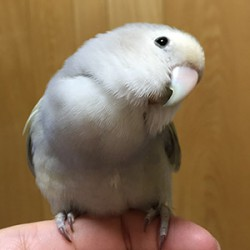 鳥フォトコンテスト「もぐら」さん