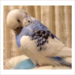 鳥フォトコンテスト「イエロー」さん