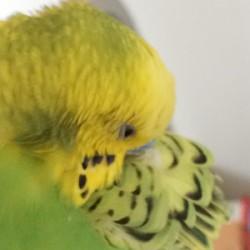 鳥フォトコンテスト「とり」さん