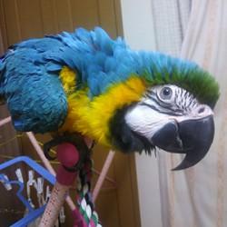 鳥フォトコンテスト「キャリー」さん