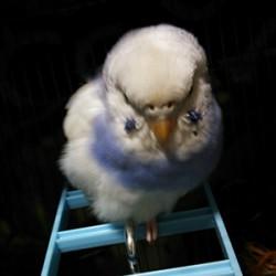 鳥フォトコンテスト「吉宗」さん
