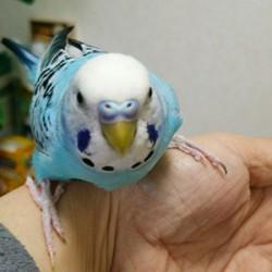 鳥フォトコンテスト「ぴい」さん
