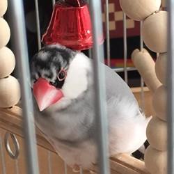鳥フォトコンテスト「おさけ」さん