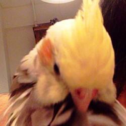 鳥フォトコンテスト「ちいちゃん」さん
