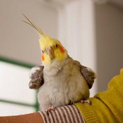 鳥フォトコンテスト「ぽぃ」さん
