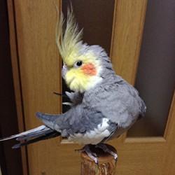鳥フォトコンテスト「CoCoa」さん