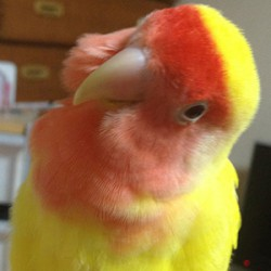 鳥フォトコンテスト「かろちゃ」さん
