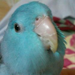 鳥フォトコンテスト「青天目」さん