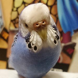 鳥フォトコンテスト「伏犠」さん