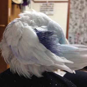 鳥フォトコンテスト「空」さん