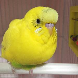 鳥フォトコンテスト「ナナ」さん